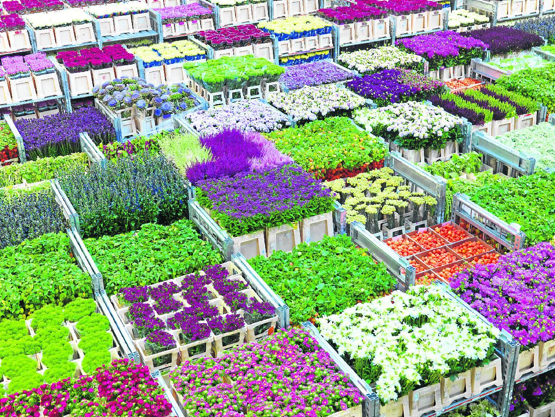Букет пион, поставщики живые цветы оптом украина