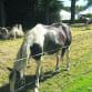 circus kamelen en paarden2