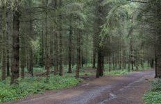 Heuvelwandeling met de boswachter