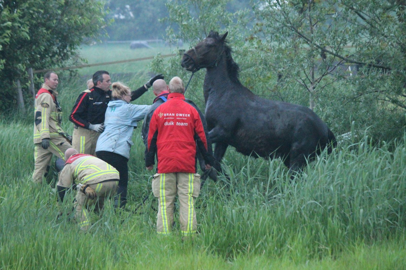 paard te water