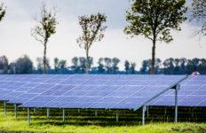 Grootste zonneweide van Flevoland in aanbouw in Emmeloord. Foto Rob Voss