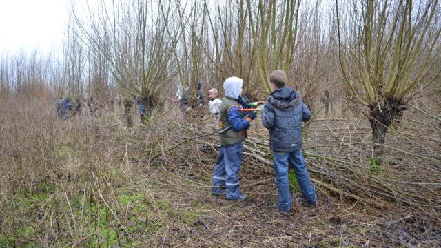 wilgen knotten in het Enge Bos