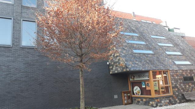 Nieuwe boom voor Doopsgezinde kerk